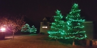 C6 LED Green in Spruce Trees