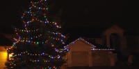 C9-led-multi-on-house-and-tree