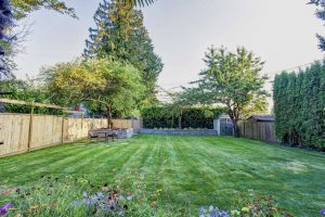backyard lawn with cut lines on grass from lawn mower