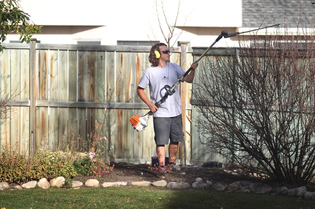 young man pruning shrub with hedge trimmers