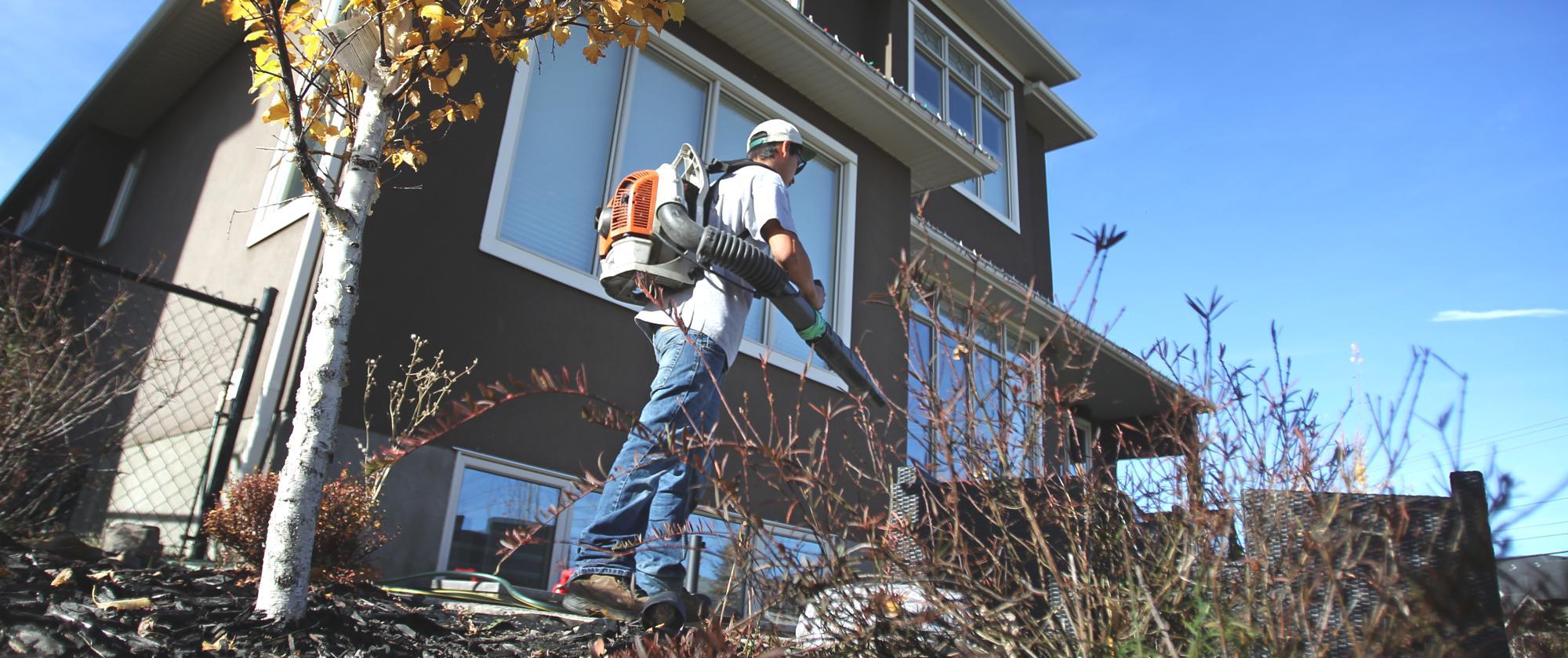 Yard Clean Up Leaf Debris